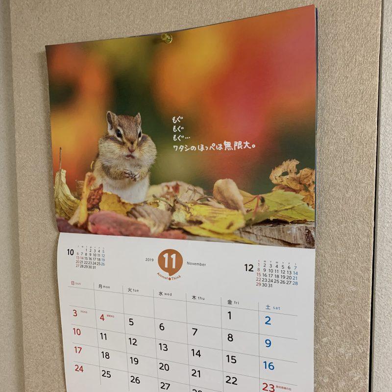 11月のアニマルズ!!